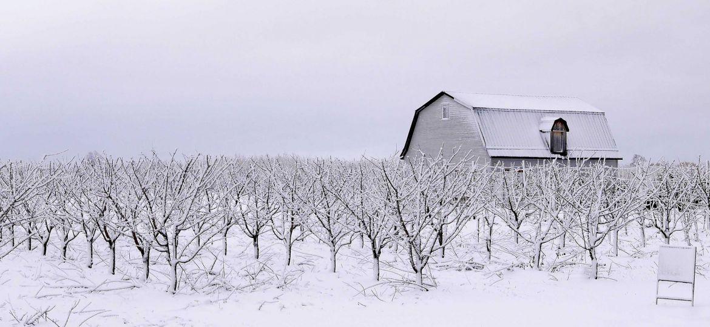 Landscape-Photography_Weather-Vane_Denis-Cahill
