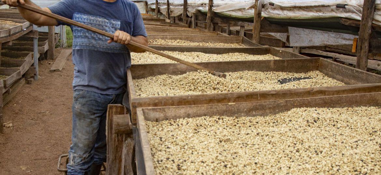 jose_louis_drying_coffee_beans-2-1