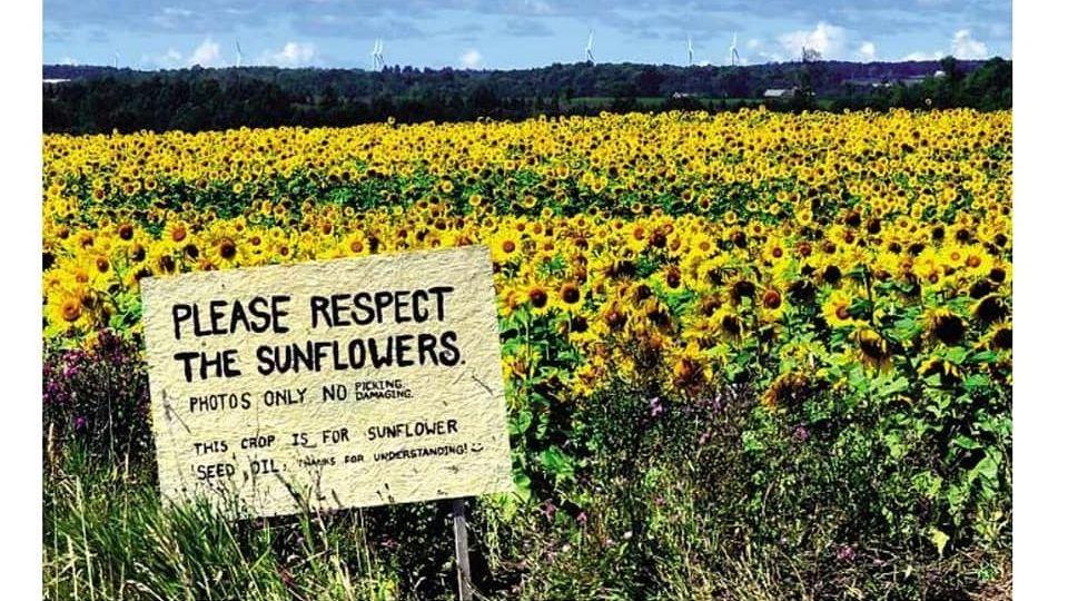 landscape_sunflower_blanked_names-1-1