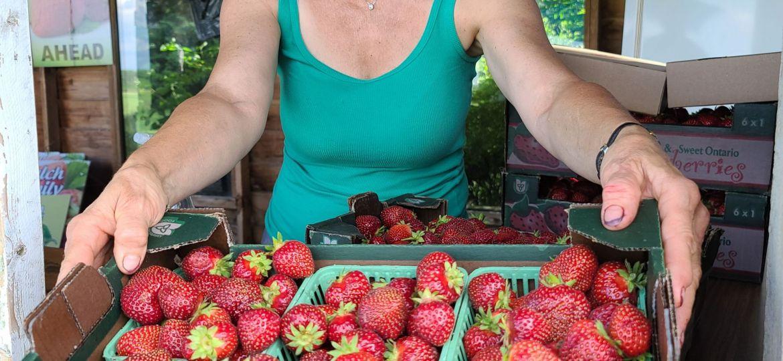 people_strawberry_season_sharongrose-1-1