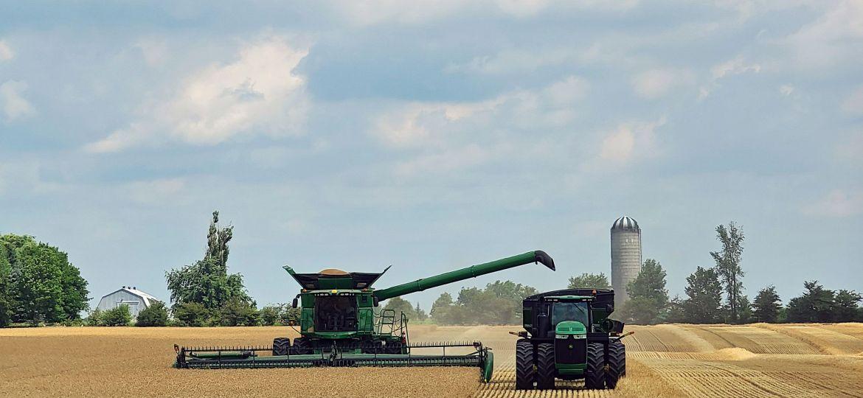 production__grain_harvest_sharongrose-1